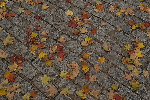 Leaves Scattered on Cobblestones by Michael Wall