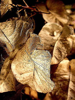 Leaves by Tricia Kett