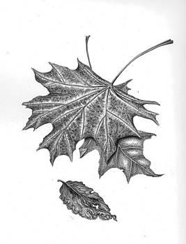 Leaves2010 by Elizabeth H Tudor