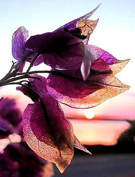 Leaving Sunrise by Tricia Kett