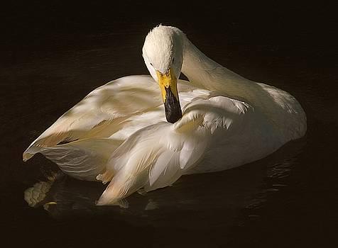 Leda's Swan by Risa Bender