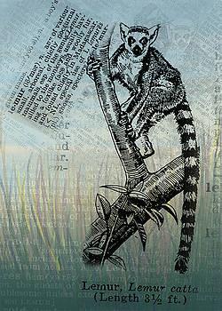 Lemur catta by Mary Elizabeth Thompson