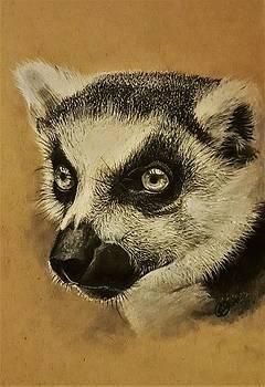 Lemur by Gilca Rivera