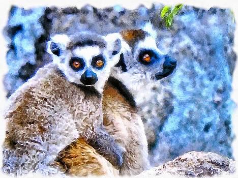 Lemurs of Madagascar by Maciek Froncisz