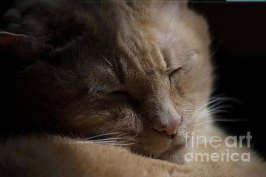 Leo Cat and Sunshine  by JW Hanley