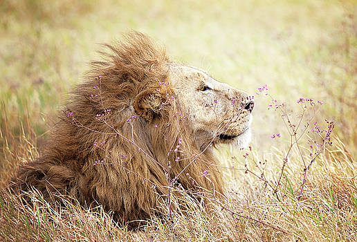 Leo Profile by Vicki Jauron