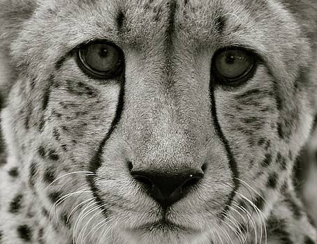 Leopard 1  by Jaqueline Briel