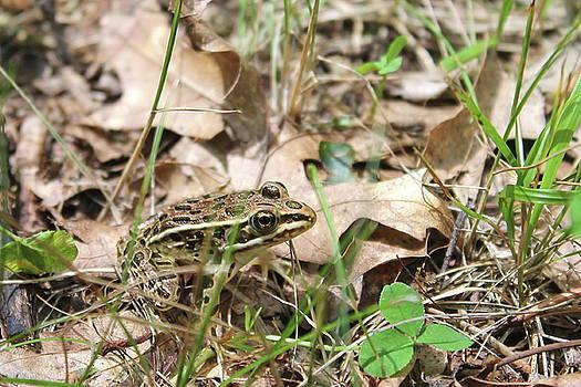 Leopard Frog  by Bethany Benike