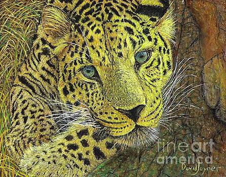 Leopard Gaze by David Joyner