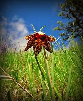 Leah Grunzke - Leopard Lily