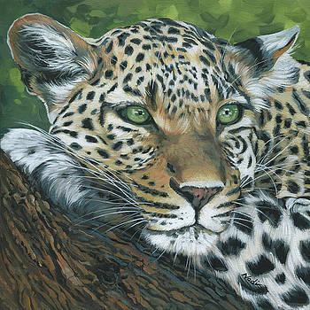 Leopard by Nadi Spencer