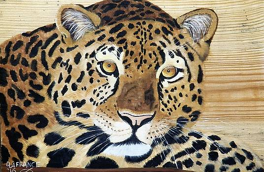 Leopard on Wood  by Debbie LaFrance