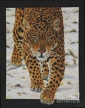 Leopard by Sid Ball