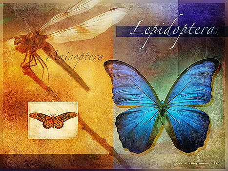 Lepidoptera, Anisoptera, Butterfly And Dragonfly by R christopher Vest