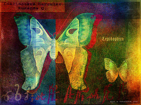 Lepidoptera, Moth And Butterfly by R christopher Vest