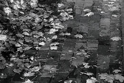 Les Feuilles Mortes by Steven Huszar