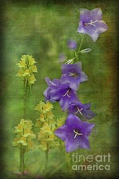 Les Fleurs by Liz Alderdice