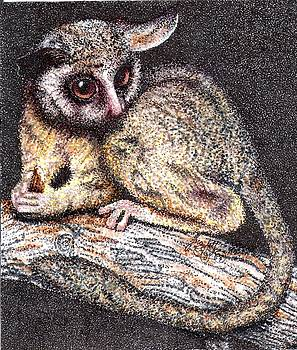 Scarlett Royal - lesser bush baby