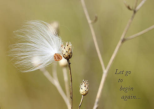 Let Go to Begin Again by Laura Greene