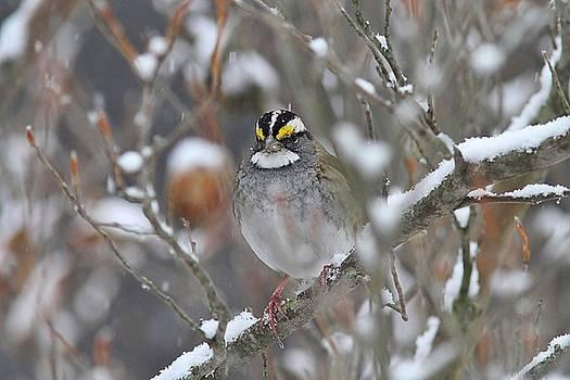 Let it Snow by Linda Crockett