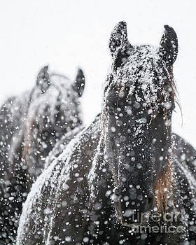 Let it Snow by Lori Ann  Thwing