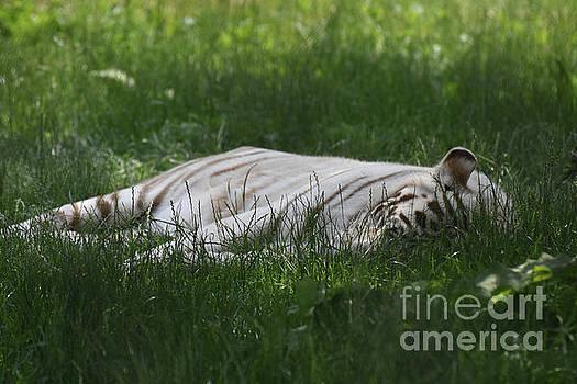 Let Sleeping Tigers Lay in Green Grass by DejaVu Designs
