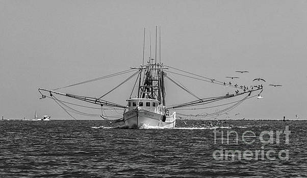 Let the Shrimping Season Begin by Dale Powell