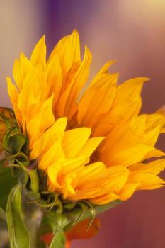 Let the Sun Shine by Joan Bertucci