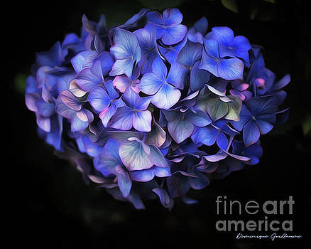l'Hortensia bleu by Dominique Guillaume