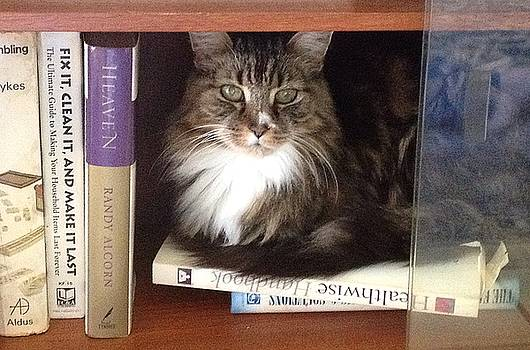 Library Cat by Kathy Burrows