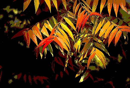 Library Leaves by Norman  Andrus