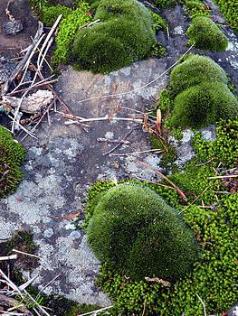 Christine Belt - Lichen and Moss