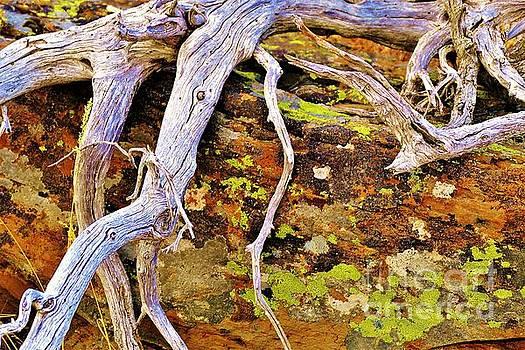 Lichen Art by Michele Penner