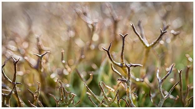 Lichen by Gina Broma