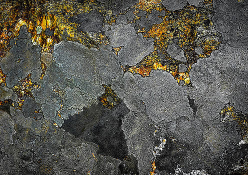 Lichen on Granite Rock Abstract by Donna Lee