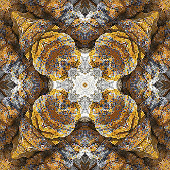 Lichen Rock Mandala by Julian Venter