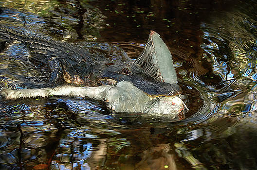 Life and Death in the Florida Eveglades by Rich Leighton