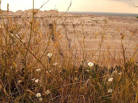 Life in the Badlands by Theresa Willingham