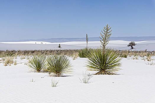 Life In White Sands by Ryan Seek