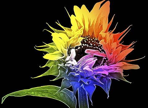 Life is Like a Rainbow ... by Gwyn Newcombe