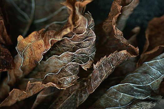 Nikolyn McDonald - Life Lines - Nature Abstract