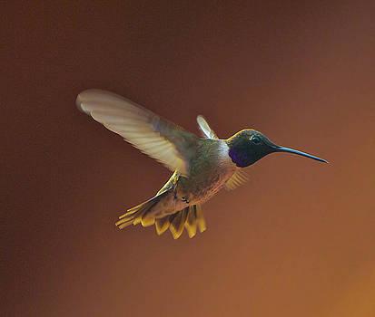 Life of a hummingbird by Wendy Girard