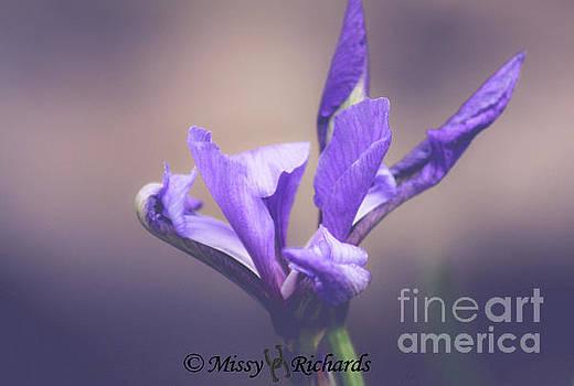 Life Unfolding by Missy Richards