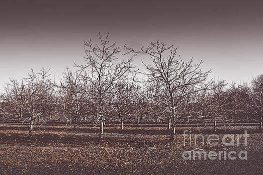 Lifeless cold winter orchard trees by Jorgo Photography - Wall Art Gallery