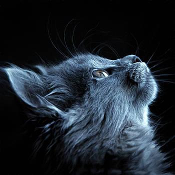 Lift Me Up Cat Art by Georgiana Romanovna
