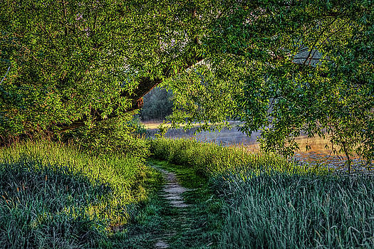 Light And Green #h5 by Leif Sohlman