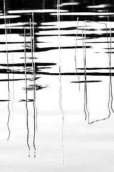 Light And Shadow Reeds Abstract by Debbie Oppermann