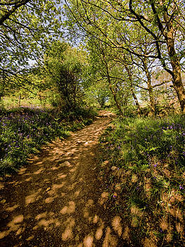 Light and Shadows at Holwell Lawn by Jay Lethbridge