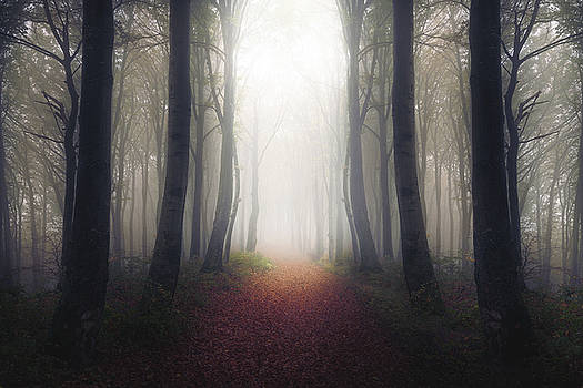 Light at the end of the trail by Toma Bonciu