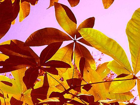Amy Vangsgard - Light Coming Through Tree Leaves 1